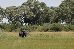 Okavango-4