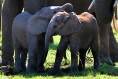 Serengeti-19