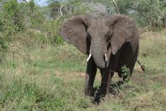 Serengeti-22