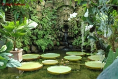 Sir William Walton's garden Ischia 9