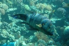 Aqaba_13