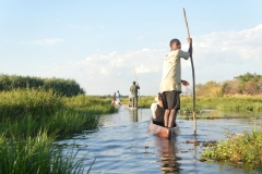Okavango - Poling Through the Pathways