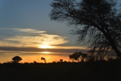 Okavango Sunrise