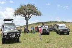 Maasai Mara - Lunch Stop