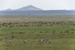 Maasai Mara - Plians Teeming With Wildlife