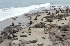 Cape Cross - Fur Seal Colony