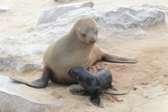 Cape Cross - Mother and Baby Fur Seals