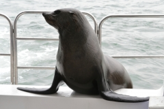 Walvis Bay - Seal on the Boat