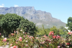 Table Mountain from the Company Gardens