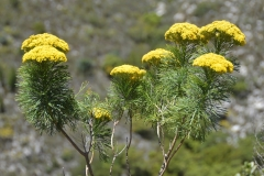 Vegetation on the Bains Kloof Pass