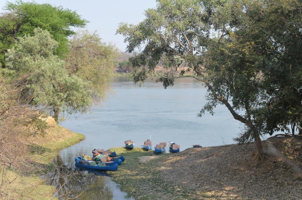 Zambezi - Lion Hunt