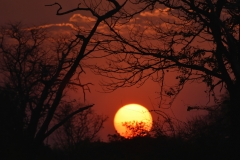 South Luangwa - Sunset