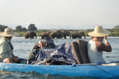 Zambezi - Photgraphing Elephants in the River
