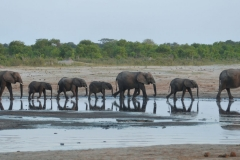 Hwange - Elephants at the Waterhole