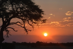 Hwange - Sunset