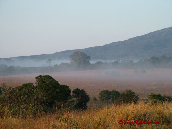 81704 Misty Dawn at Simba Camp