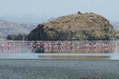 73021 Flamingoes on Lake Natron