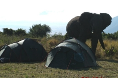 81713 Elephant by out Tents