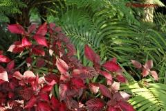 Sir William Walton's garden Ischia 11