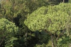 Sir William Walton's garden Ischia 3