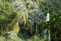 Sir William Walton's garden Ischia 5