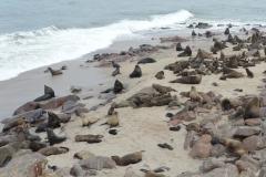 Cape Cross - Fur Seal Colony