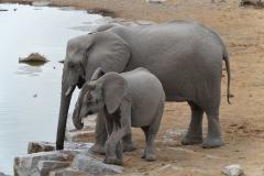 Etosha - Mother and Baby Elephant