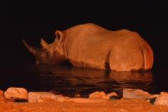 Etosha - Rhino in the Okaukuejo Waterhole