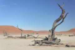 Sossusvlie - The Famous Dead Trees