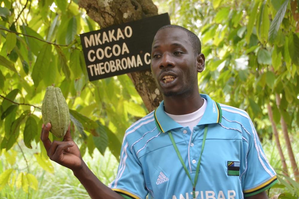 Zanzibar - Our Guide Showing a Cocoa Bean
