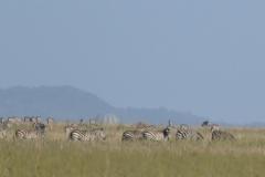 Serengeti - Balloons
