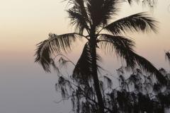 Zanzibar - Palm