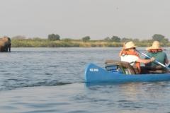 Zambezi - Canoeing Past Elephants