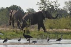 Zambezi - Elephants and Waders