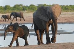 Hwange - Baby Elephants at the Waterhole