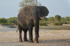 Hwange - Elephant at Nyamandhlovu Waterhole
