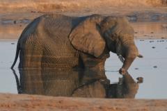 Hwange - Elephant in the Waterhole