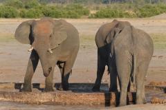 Hwange - Elephants Drinking