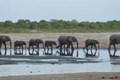Hwange - Elephants at the Waterhole