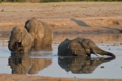 Hwange - Elephants in the Waterhole