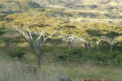 81512 View from Esirwa Camp