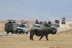 81638 Rhino and Cars