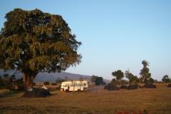 81706 Simba Camp